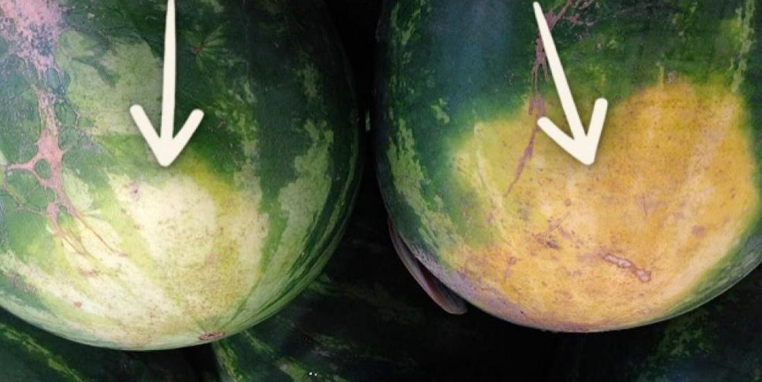 Un fermier d'expérience révèle les 5 choses à regarder pour acheter le melon d'eau parfait.